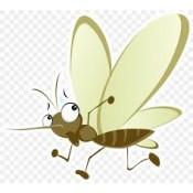 Εντομοαπωθητικά  (10)